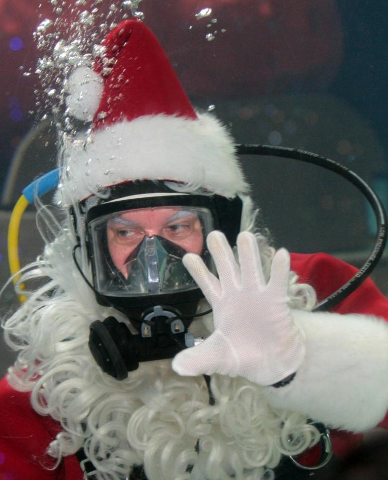 Allen Miller scuba diving as Scuba Santa at the Newport Aquarium
